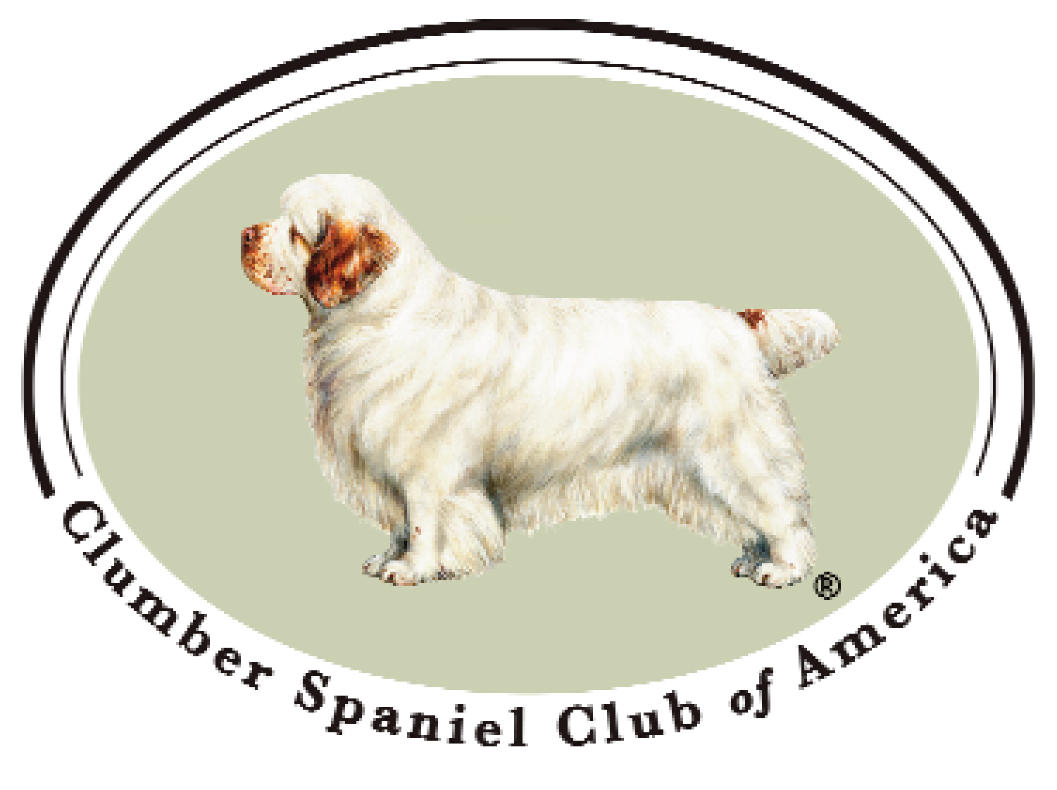 Nexus Clumbers Proudly Members of the Clumber Spaniel Club of America