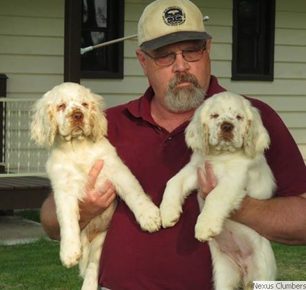 Nexus Clumber Spaniels:: Jim with Puppies
